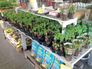 Jungpflanzen im Landmarkt Lentzen